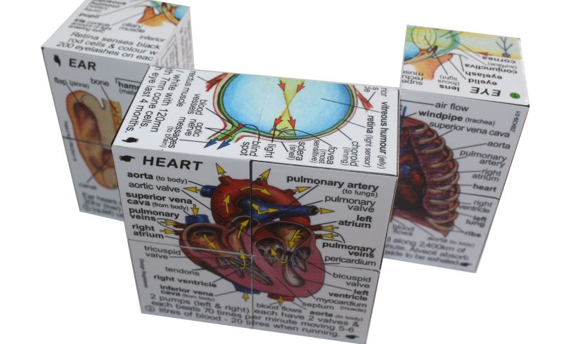 the human body cube book, partly unfolded